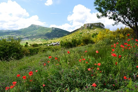 poppies mountains baronnies regional park alpine provence france